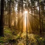 Der Trauerprozess - Abschied und Neuanfang