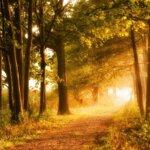 Trauerphasen bei der Trauerbewältigung - Ein wichtiger Weg