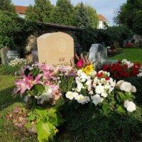 Die Lilie ist die Blume der Hoffnung