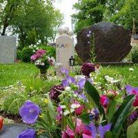Glockenblumen und Pflingstrosen im harmonischen Zusammenspiel
