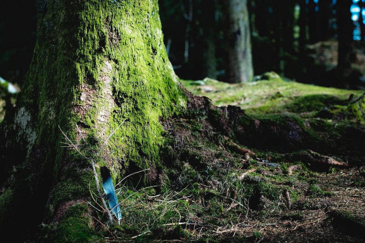Baumgrab als Alternative zum Friedhof