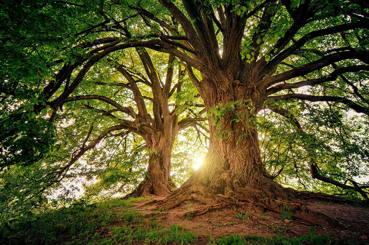 Bäume als Motiv für Trauerbilder