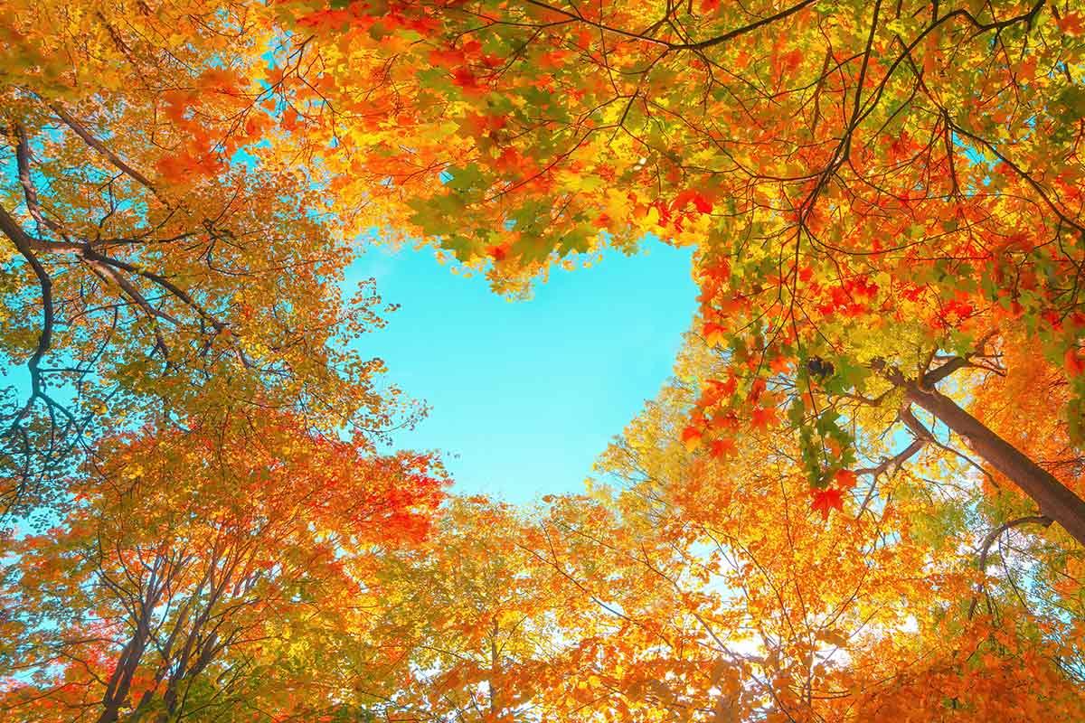 Wald im Herbst mit Herz in Baumkronen